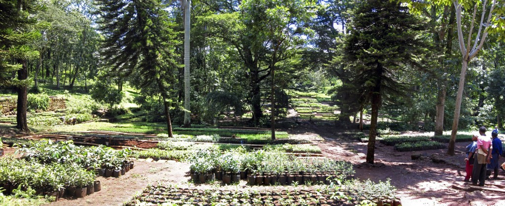 Karura Forest Nursery