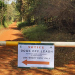 Shady Path for Dogs